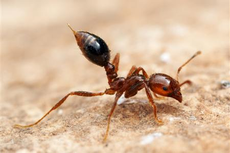 Fire Ant Treatment for Homes in Collier County, Florida